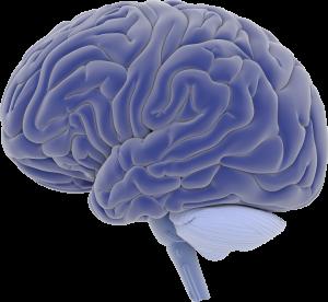 The Brain - mindful medical massage - structural bodywork