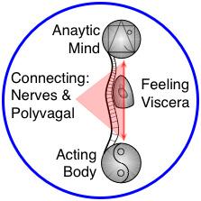 "Mind-Body & Yin-Yang in Yoga Therapy & Yoga-based Bodywork"" structural bodywork, yoga therapy"
