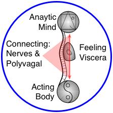 Body-Mind Nerve connections in mindful medical massage - structural bodywork